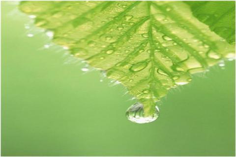 natural_leaf
